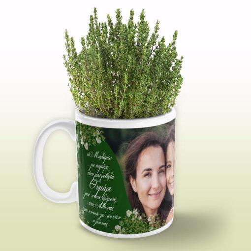 Κούπα Αρωματικό Φυτό